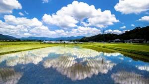 熊本県 水田